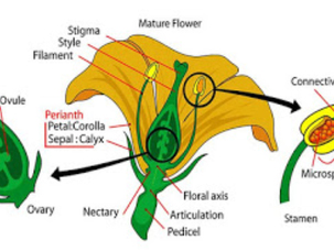 Botany, वनस्पति विज्ञान और उसकी शाखाएं