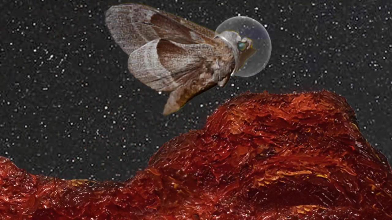 Moth on Mars