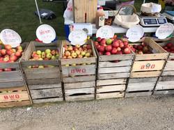 Brightonwoods Orchard