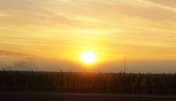 Sunrise Over Vineyards