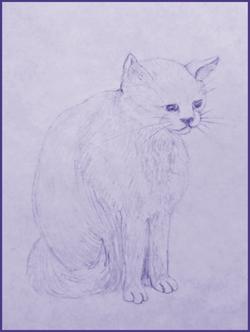 Cat in Pencil