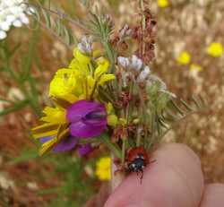 Ladybug Boquet4