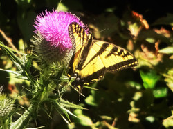 Butterfly in the Wild