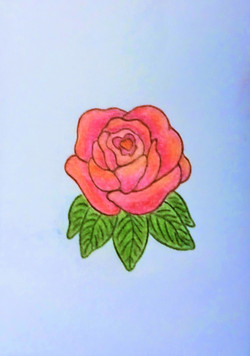 Rose Pencil Color