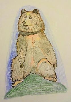 Bear on a Hill