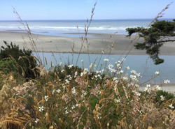 Very Blue Pacific Coast