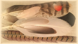 feather collection banner_edited