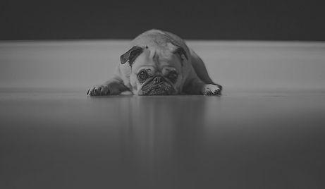 dog-entediado_edited_edited.jpg
