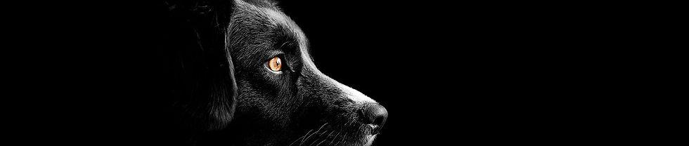 vitrine-black-dog.jpg