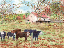A Barn with Cows