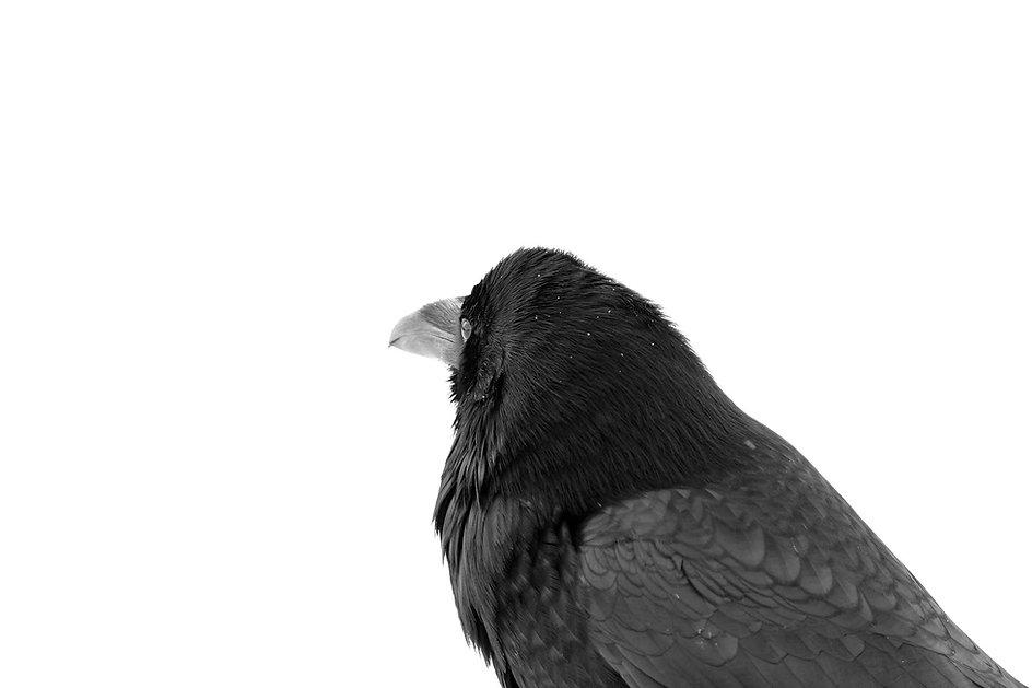 Raven Crow_edited.jpg