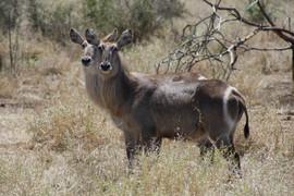 Kruger 083.JPG
