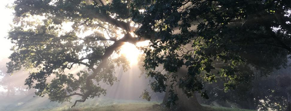 Wanderful Tree.png