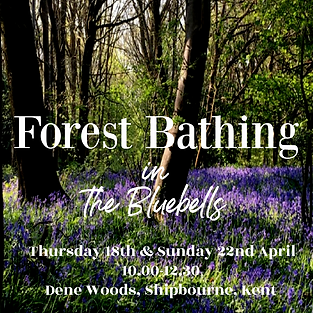 Forest Bathing Bluebells Insta.png