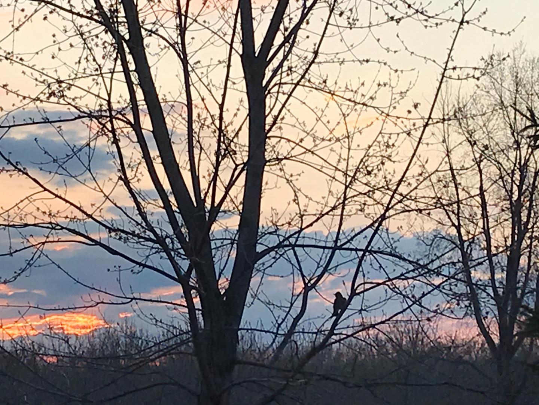 Robby the Robin at Dawn