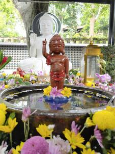 Photo taken at Bodhi Heart Sanctuary by Lim Saw Choo