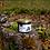 Thumbnail: Gem de afine de pădure
