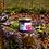 Thumbnail: Compot de vișine în suc propriu