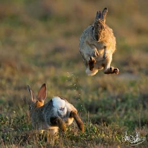 Go Lean, Leap Like a Rabbit