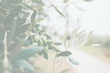 Fruit%20and%20Leaves_edited.jpg