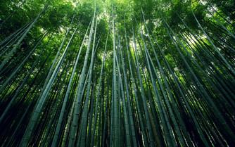 Bamboo Fabrics (Part 2)