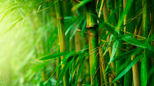 Bamboo Fabrics (Part 1)