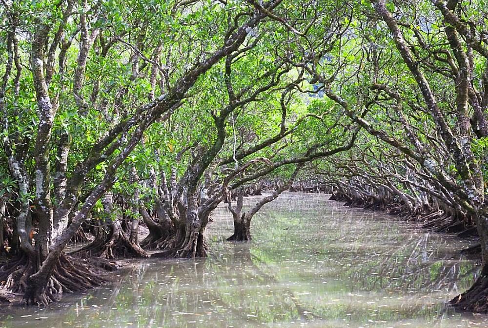 Mangrove Kayaking in Taketomi, Japan