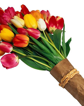 Tulips-Flower-Bouquet-with-White-Backgro