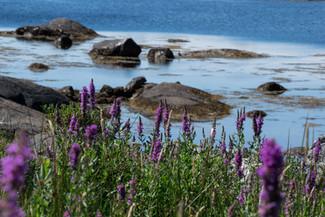 fleurs-irlande-ring-of-kerry-voyage
