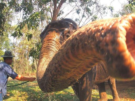 Visiting an Elephant Sanctuary