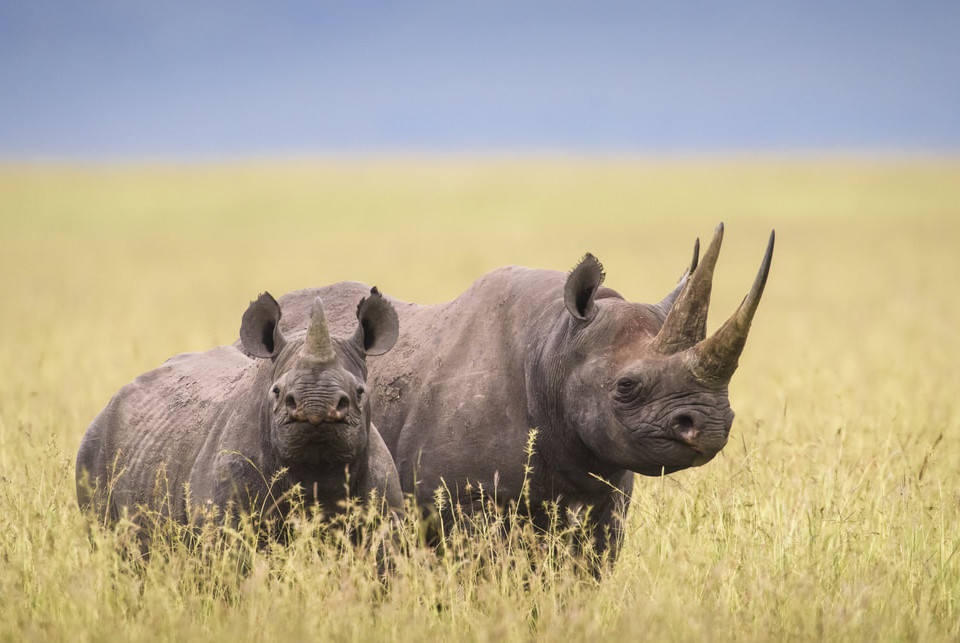 margot-raggettrememberingrhinos-5327_ori