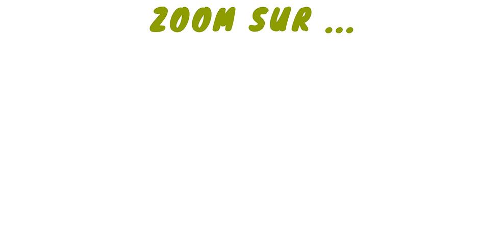 ZOOM SUR.png