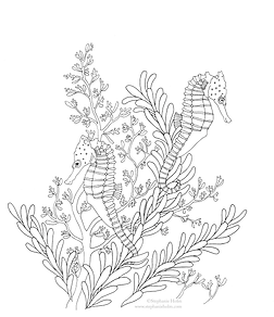 Seahorse Colouring In by Stephanie Holm