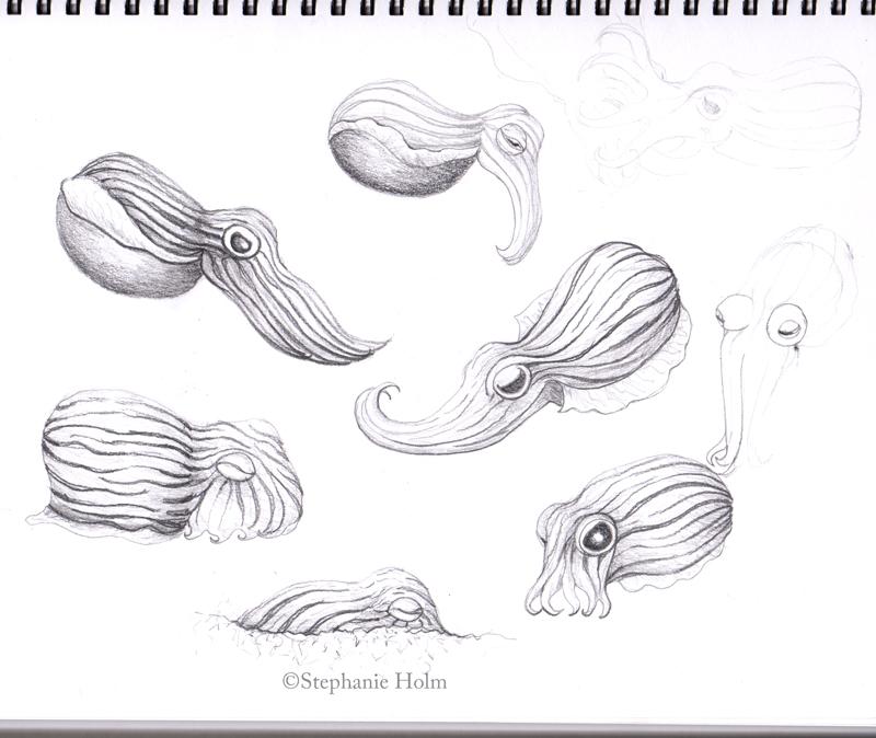 Squiddle, the pyjama squid