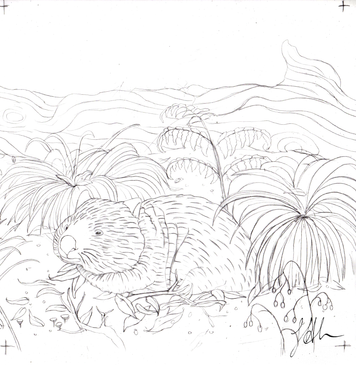 Sketch for wombat colouring in page for Wildscapes