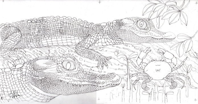 Sketch for crocodile colouring in page for Wildscapes