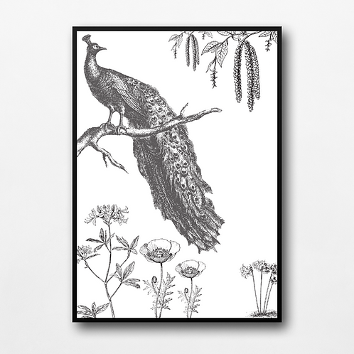 The Handsome Peacock- Print