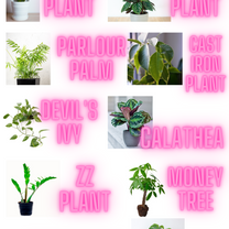 Plants for every home.