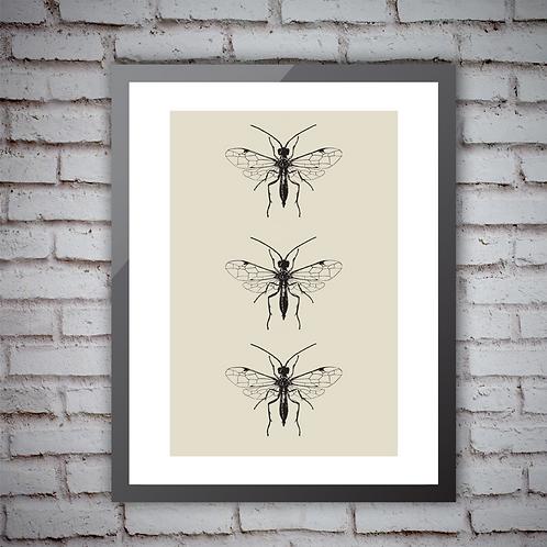 Insect Trio - Print