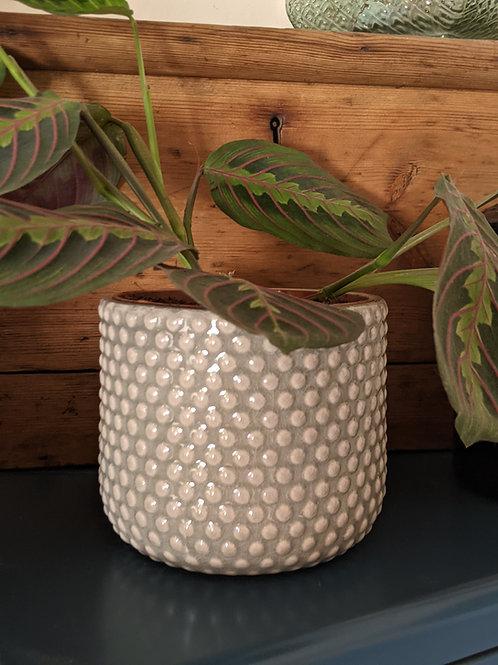 Dotty Plant Pot - Grey