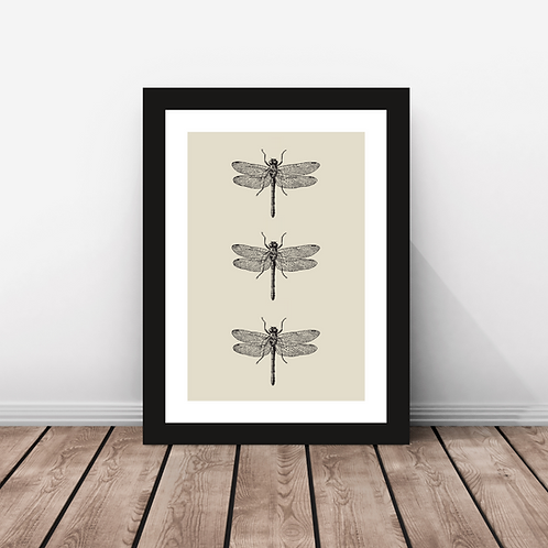 Dragonfly Trio- Print