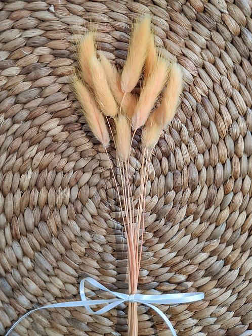 Dried Bunny Tails in Mustard Yellow- 10 piece