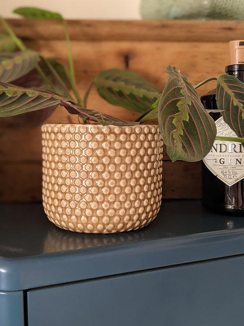Dotty Plant Pot - Light Brown