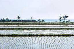 ricefield-notopeninsula-daisukekondo-283