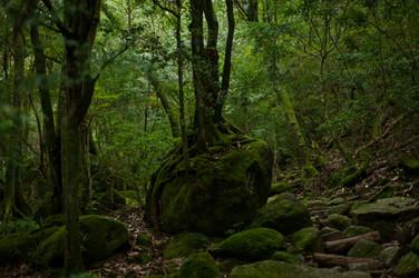 Yakushima, Kagoshima