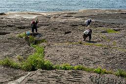 kelp-notopeninsula-daisukekondo-5075.jpg