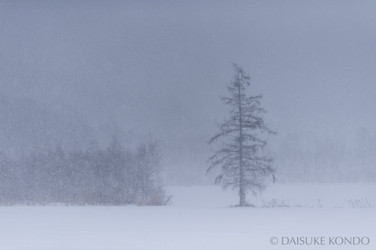 Hokkaido WInter