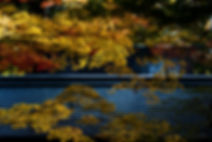 temple-autumnleaves-gifu-daisukekondo.jp