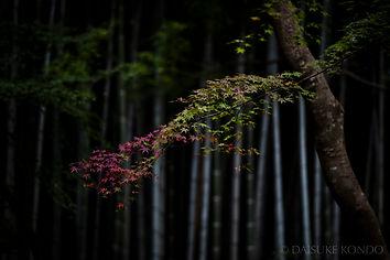 autumn-mood-kyoto-daisukekondo.jpg