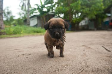 I'm cute, doggone it